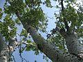 Дендрологічний парк 210.jpg