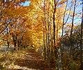 Золотой коридор осени.jpg