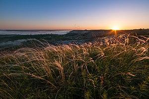 Крейдова флора, ковила на світанку.jpg