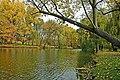 Острів восени. Онуфріївський дендропарк.jpg