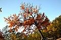 Осінь в Пущі водиці.jpg