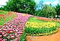 Парк преобразуется во время ежегодной выствки тюльпанов.jpg