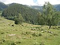 Поляна ручьёв - panoramio.jpg