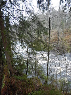Река Рощинка.JPG