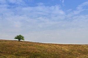 Sjenica - Image: Специјални резерват природе Увац 005
