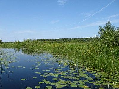 Старе русло річки Прип'ять біля впадіння у озеро Люб'язь.jpg
