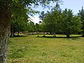 متنزه طونق بالحضيرة الوطنية بالقالة ولاية الطارف الجزائر.jpg