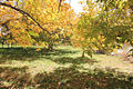پاییز-باغ.jpg