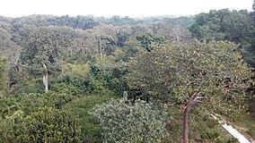 সাতছড়ি জাতীয় উদ্যান, হবিগঞ্জ.jpg