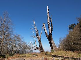 塔塔加夫妻神木 - Tataka Couple Trees - 2012.02 - panoramio.jpg