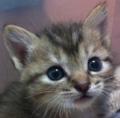 子猫.png
