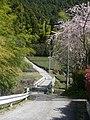桜(御堂中) - panoramio.jpg
