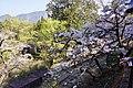 櫻花鐵道 Sakura Railway - panoramio (3).jpg