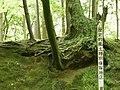 歴史的風土 特別保存地区 (3602677422).jpg