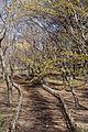 神代植物公園 - panoramio.jpg