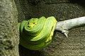 緑蛇 (15803540120).jpg