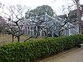 道明寺天満宮 梅園 Dōmyōji-temmangū 2011.2.27 - panoramio.jpg