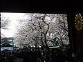 靖国神社の桜 - panoramio.jpg