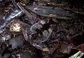 022 Amazonas TaniaFraga 23.JPG
