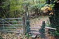 1066 Country Walk enters Powdermills Wood - geograph.org.uk - 2187762.jpg
