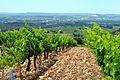 140614 Chateauneuf-du-pape-02.jpg
