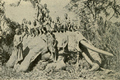 150yroldelephantmtelgon.png