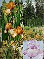 1969 Cooley's Gardens (1969) (16048840744).jpg