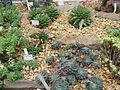 20070318 Serres Plantentuin Gent (048).jpg