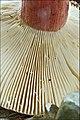 2010-10-10 Russula queletii Fr 111964.jpg
