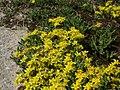 20120609Wiesenblumen Reilingen5.jpg