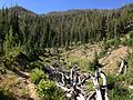 2013-08-09 10 02 11 Downed trees from an avalanche along the upper Jarbidge River in Nevada.jpg