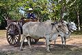 201312181112b (Hartmann Linge) Sukhothai Si Chum.jpg