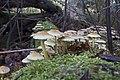 20141113 004 Well De Hamert Paddenstoel (15597554508).jpg