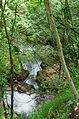2014 07 Selva di Progno (VR) Italy - Giazza - Val Fraselle - ravin forest - Ctg Baldo Lessinia org photo Paolo Villa FOTO6786.JPG