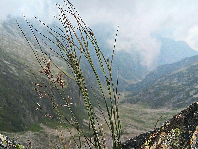 File:23020 Gordona, Province of Sondrio, Italy - panoramio.jpg