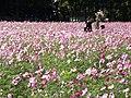 2 Chome-1 Hashimoto, Midori-ku, Sagamihara-shi, Kanagawa-ken 252-0143, Japan - panoramio.jpg
