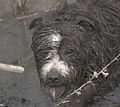 2 Dogs in Ireland Wood Quarry, Leeds. W.Yorkshire. 01.jpg