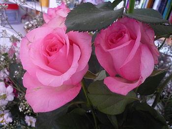 Français : 2 roses