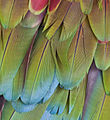 2multicolored feathers1c (8305686504).jpg