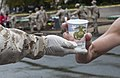 40th Annual Marine Corps Marathon 151025-M-WG312-225.jpg