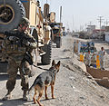 563rd MPs, AUP clearance operation discover two noses is better than one 121003-Z-NO327-011.jpg