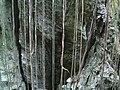57 Rocks and Roots, Santavana (9121967641).jpg