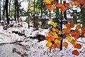 """6879vik Zakopane, cmentarz """"Na Pęksowym Brzyzku"""". Foto Barbara Maliszewska.jpg"""