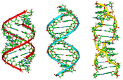 A-B-Z-DNA Side View.png