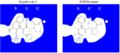 ACE-Molekularer WM.png