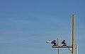 ALPR License Plate Reader Cameras Pensacola Florida (27910151545).jpg