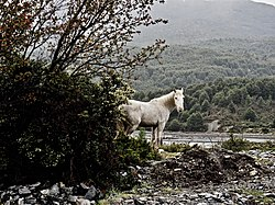 A Horse Along the Carretera Austral, Patagonia, Chile.jpg