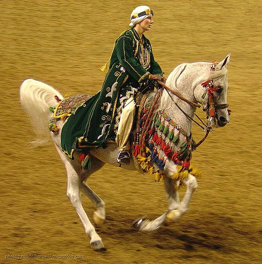 A beautiful Egyptian Arabian Horse and Rider at the 2006 Arabian Horse Nationals (2536434720)