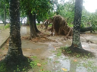 University of Lagos - Image: A fallen tree at the University of Lagos Lagoon Front