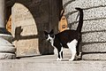 A feral cat in Istanbul, May, 2015-3.jpg